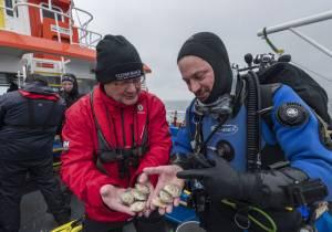 Heriot-Watt scientists aim to restore oyster population
